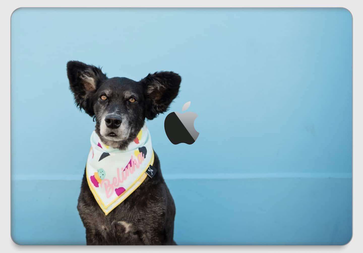 The Best Personalised Pet Gifts For Dog Owners - CaseApp Macbook Skin