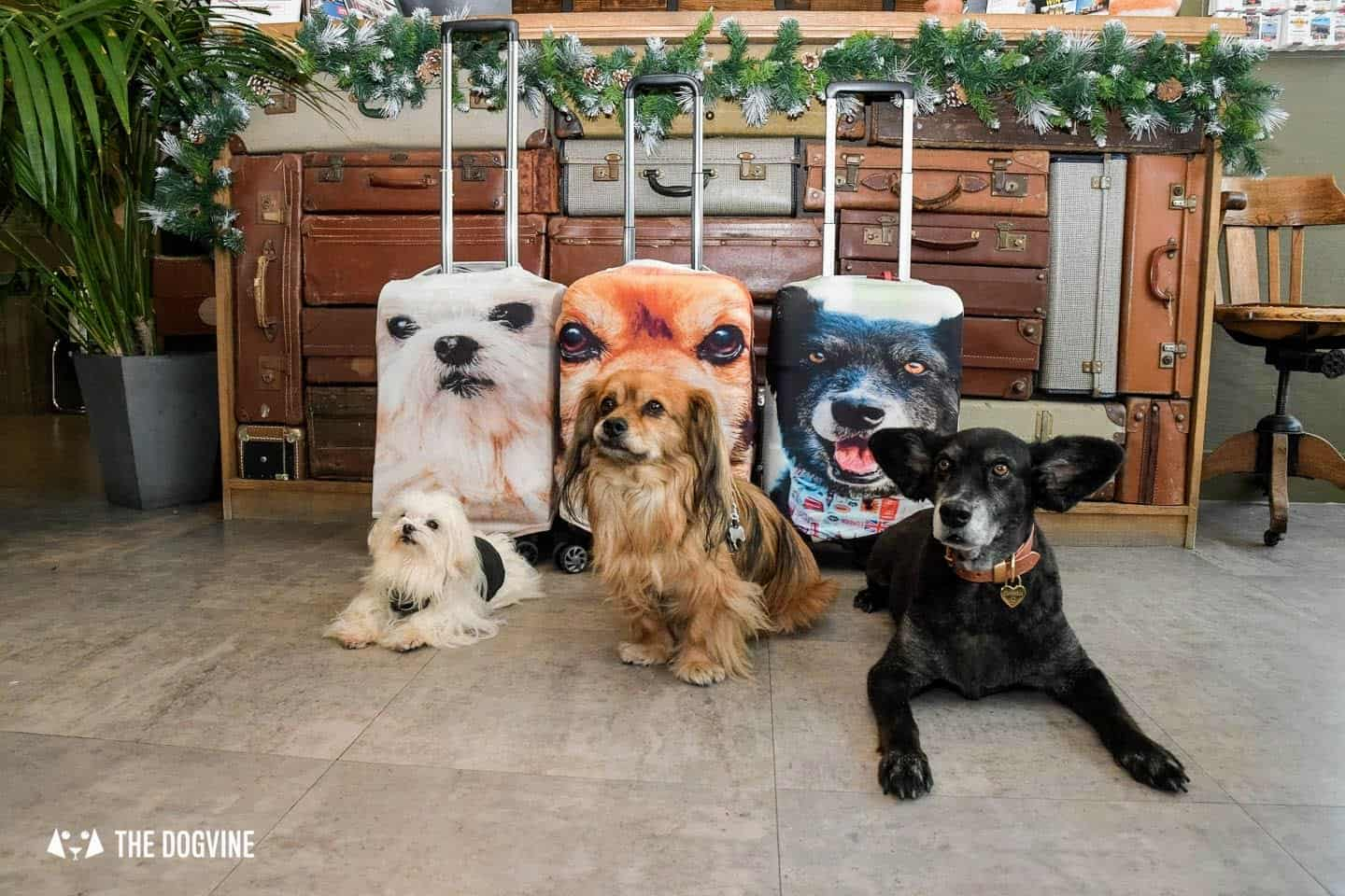 The Best Personalised Pet Gifts For Dog Owners - Firebox Pet Head Luggage Cover - At The Hotel