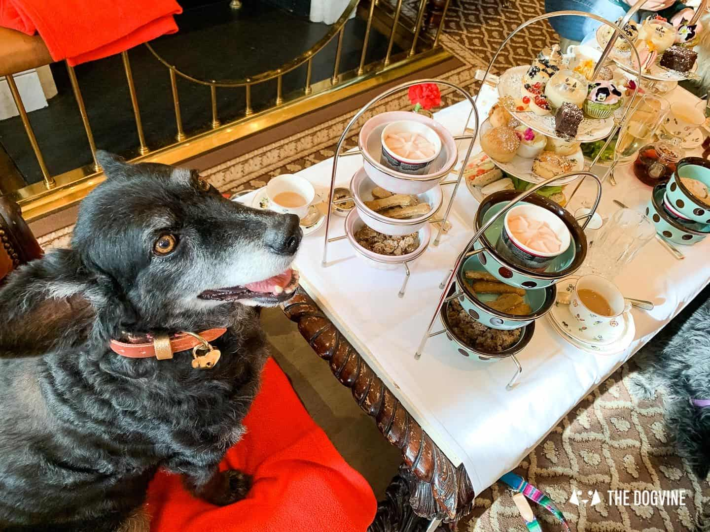 Dog Afternoon Tea At The Egerton House Hotel 10