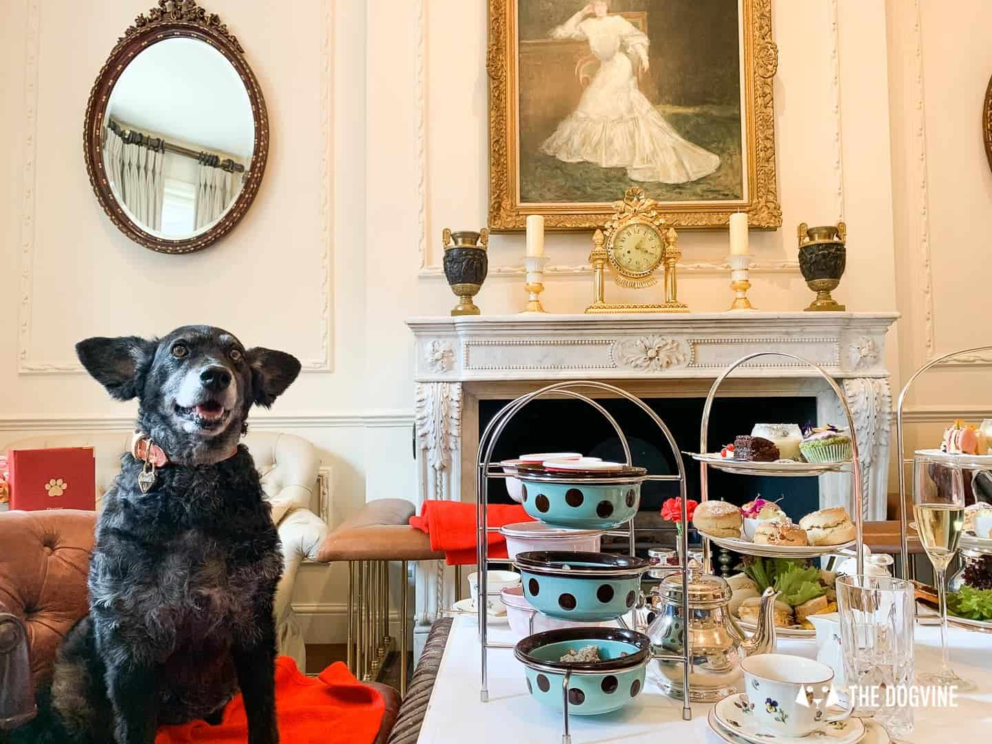 Dog Afternoon Tea At The Egerton House Hotel, Make Your Dog's Day!