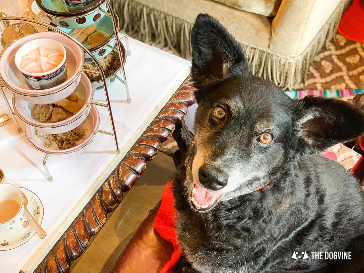 Dog Afternoon Tea At The Egerton House Hotel 15