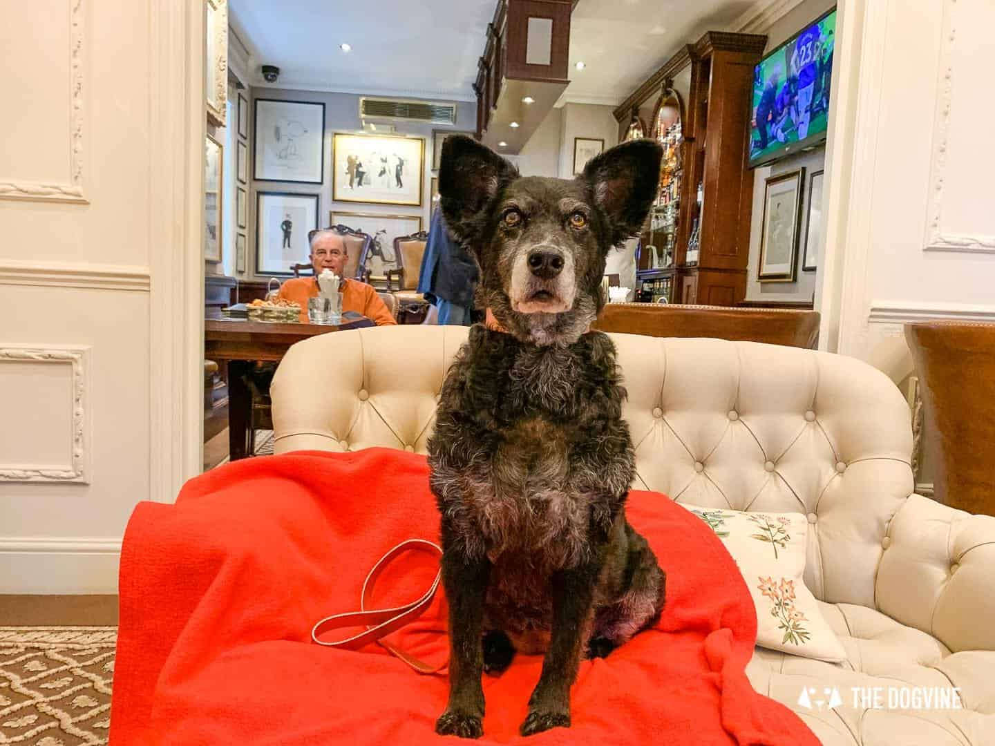 Dog Afternoon Tea At The Egerton House Hotel 22
