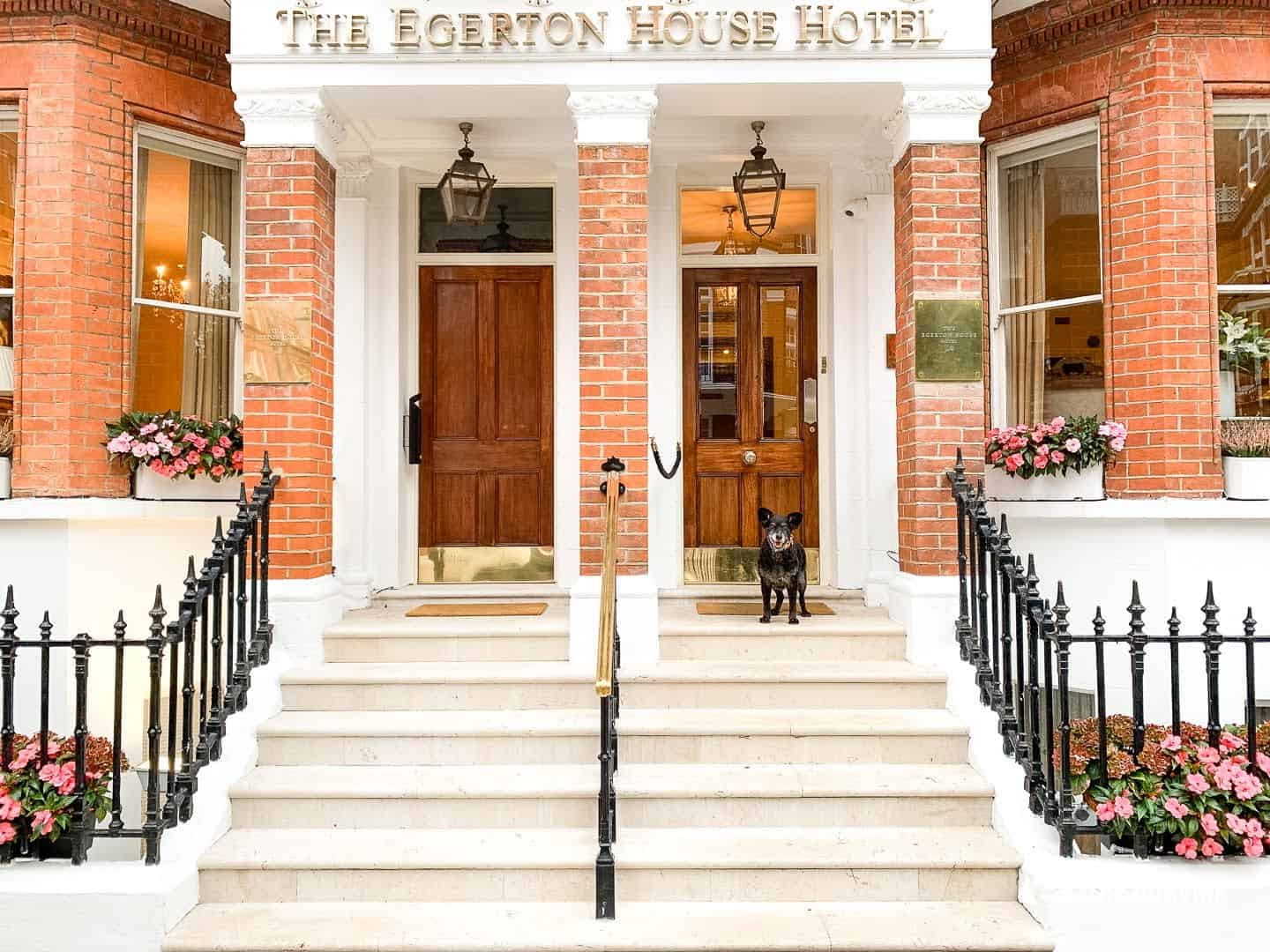 Dog Afternoon Tea At The Egerton House Hotel 24