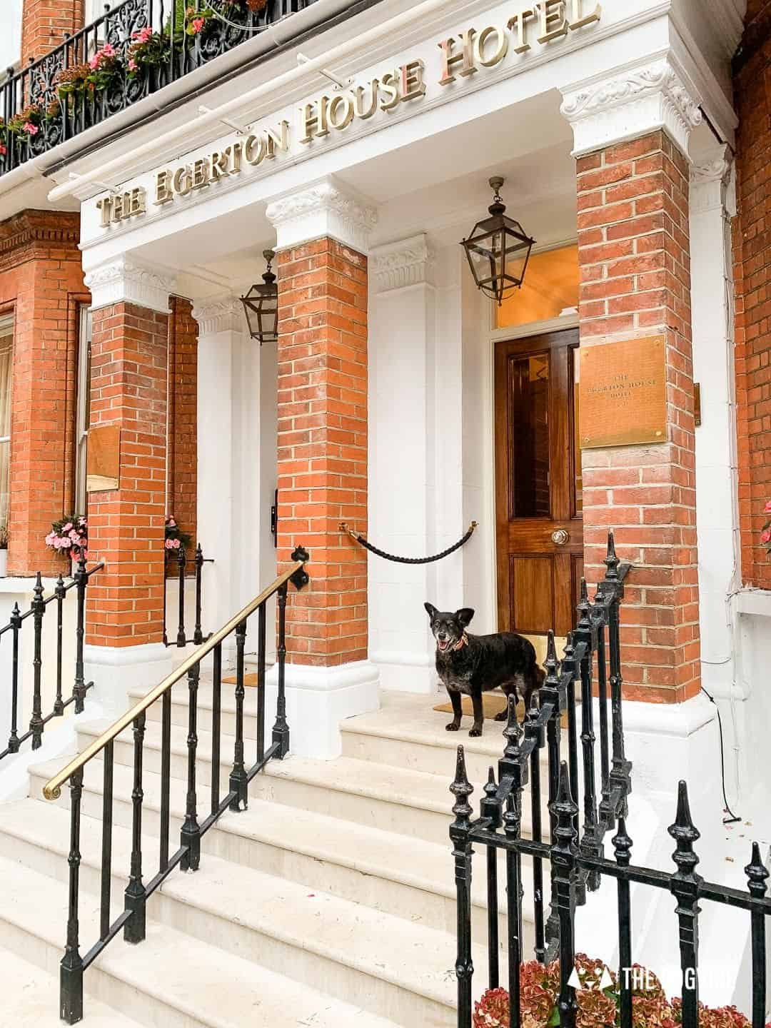 Dog Afternoon Tea At The Egerton House Hotel 26