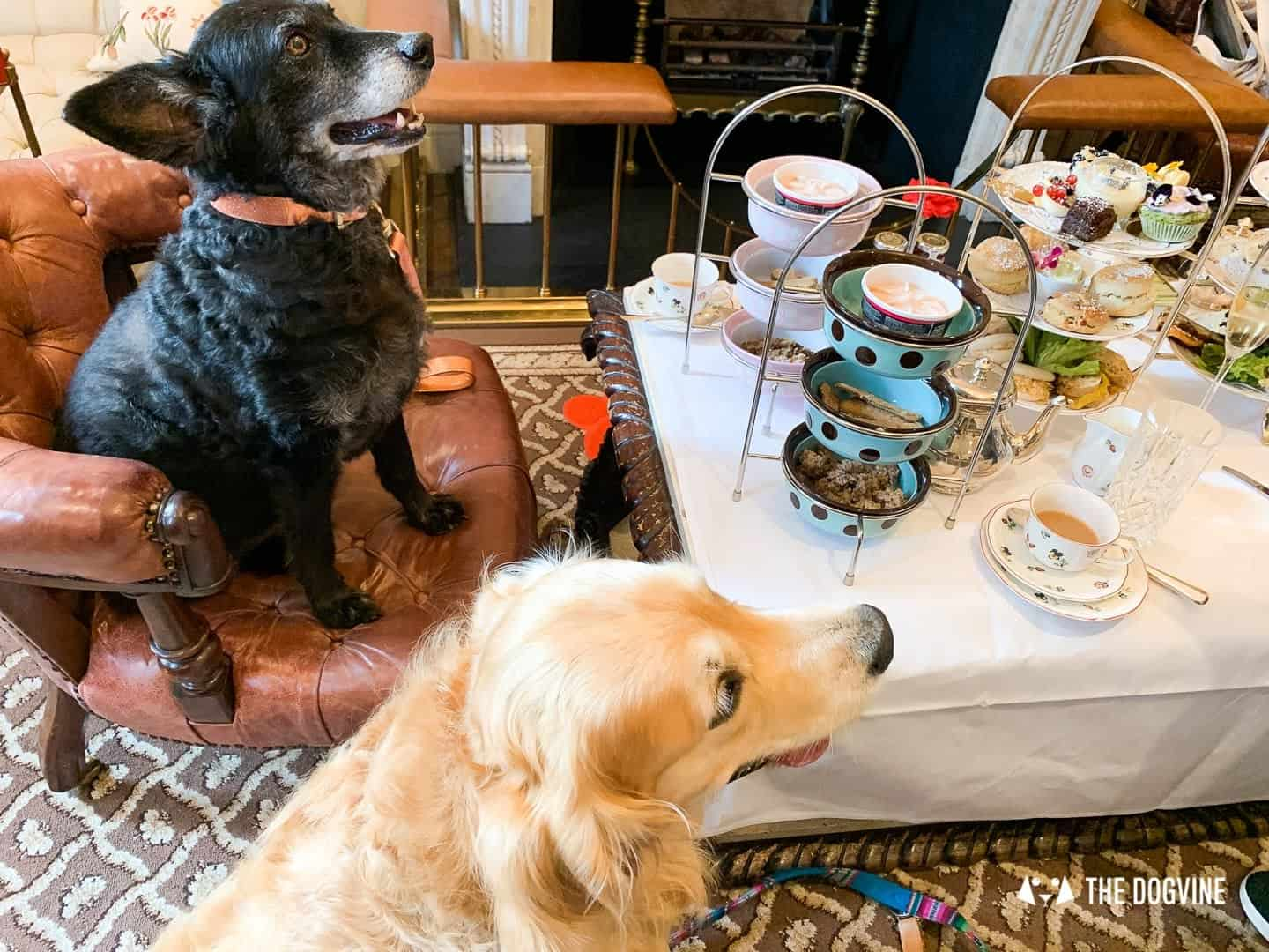 Dog Afternoon Tea At The Egerton House Hotel 8
