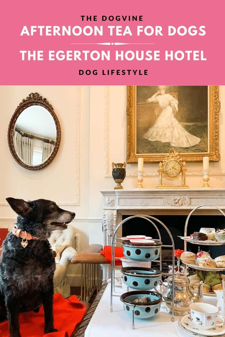 Dog Afternoon Tea At The Egerton House Hotel - Make Your Dog's Day