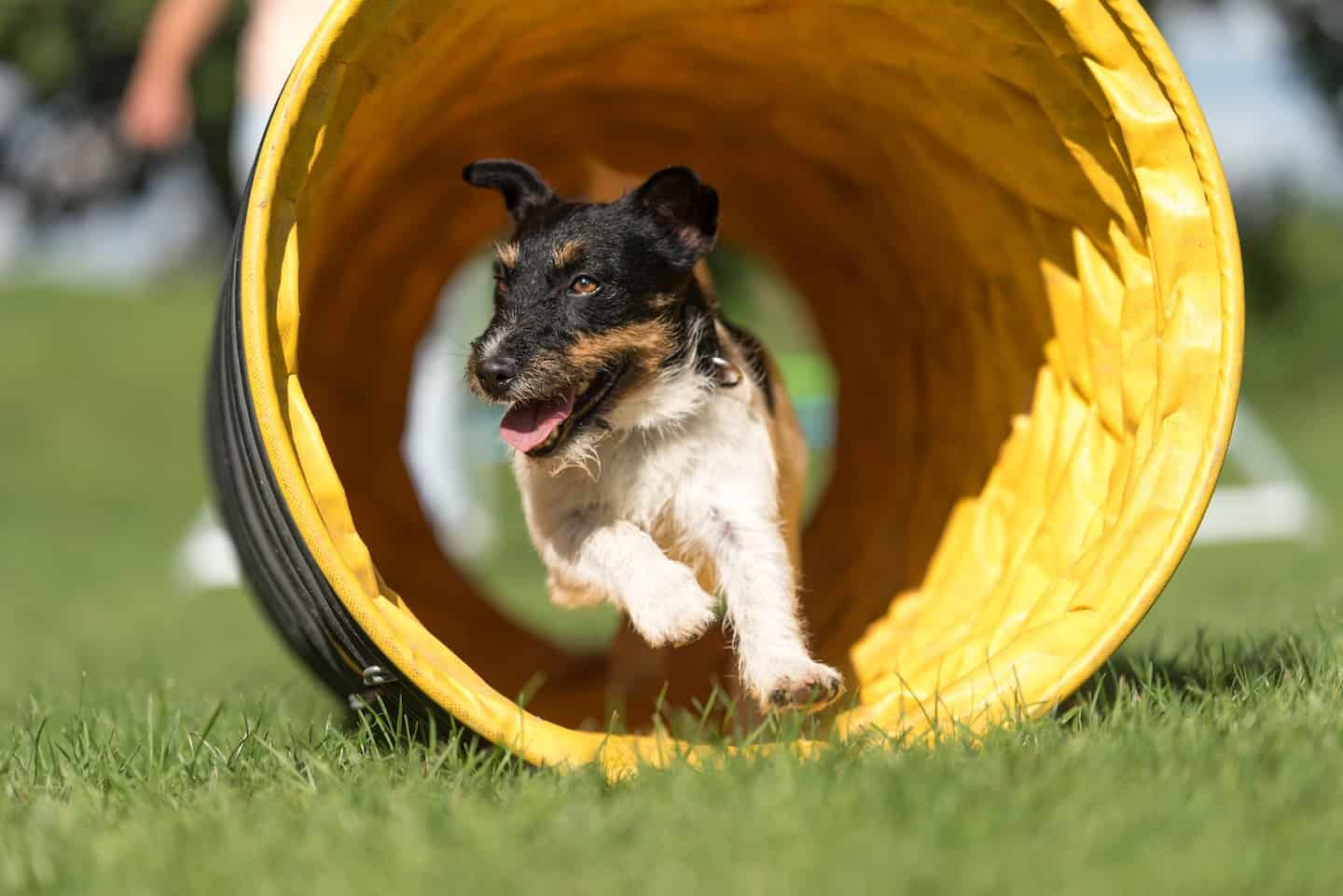Dog Agility In London | Where Can You Do Classes?