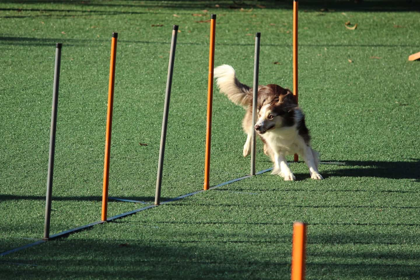 Dog Agility In London | Guide to Dog Agility Classes in London - Murilo Viviani