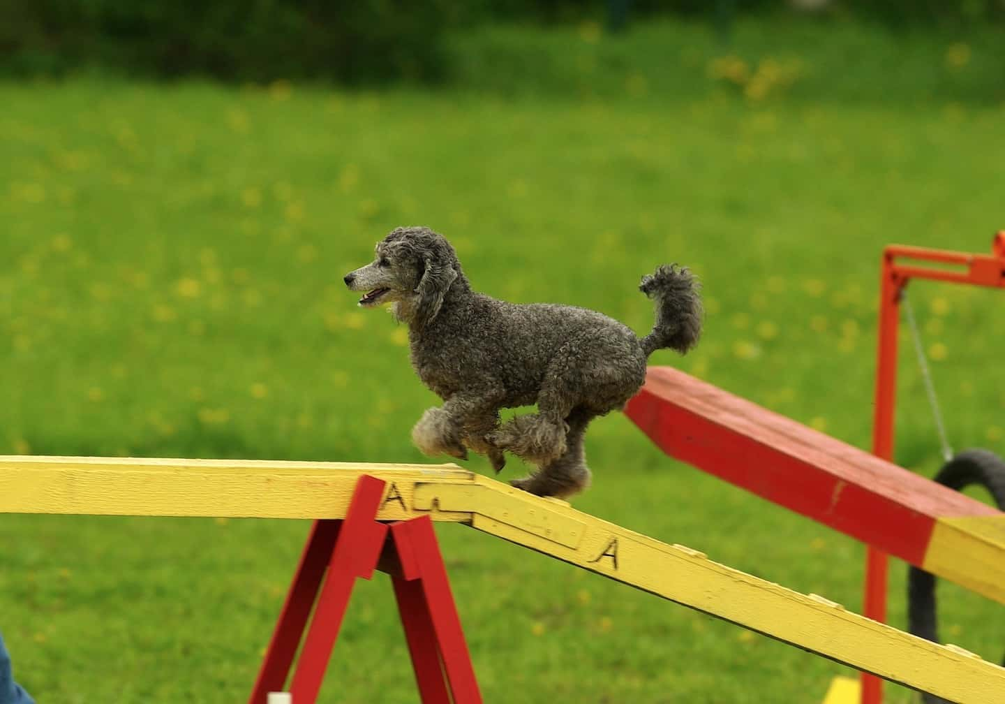 Dog Agility In London | Guide to Dog Agility Classes in London - Vilve Roosioks