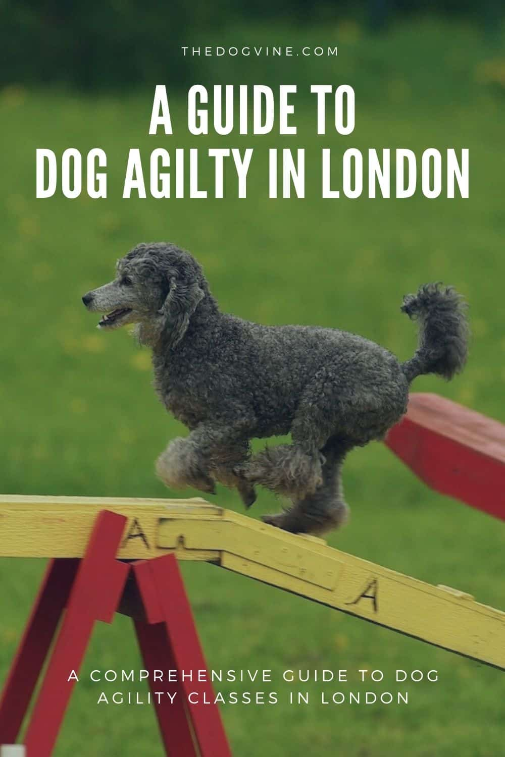Dog Agility In London - Dog Agility Classes in London Guide