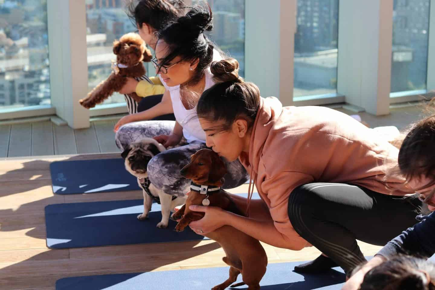 Dog Yoga With Doga Mahny London