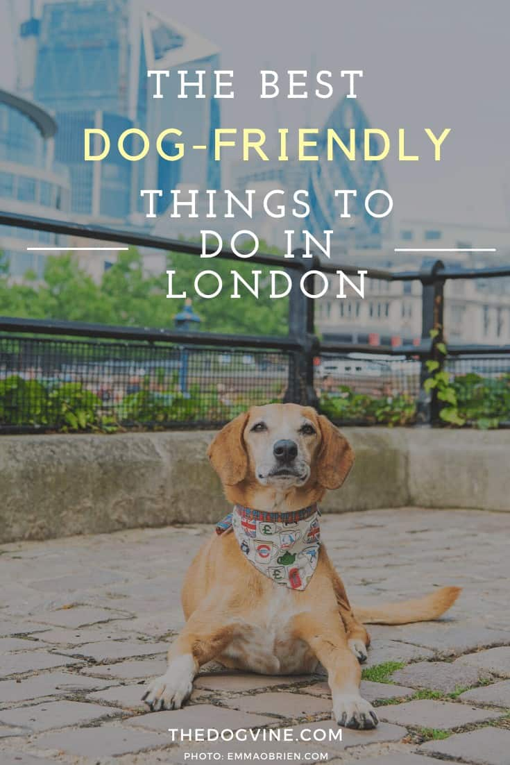 Dog-friendly London Guide - The Best Dog-friendly Things To Do in London