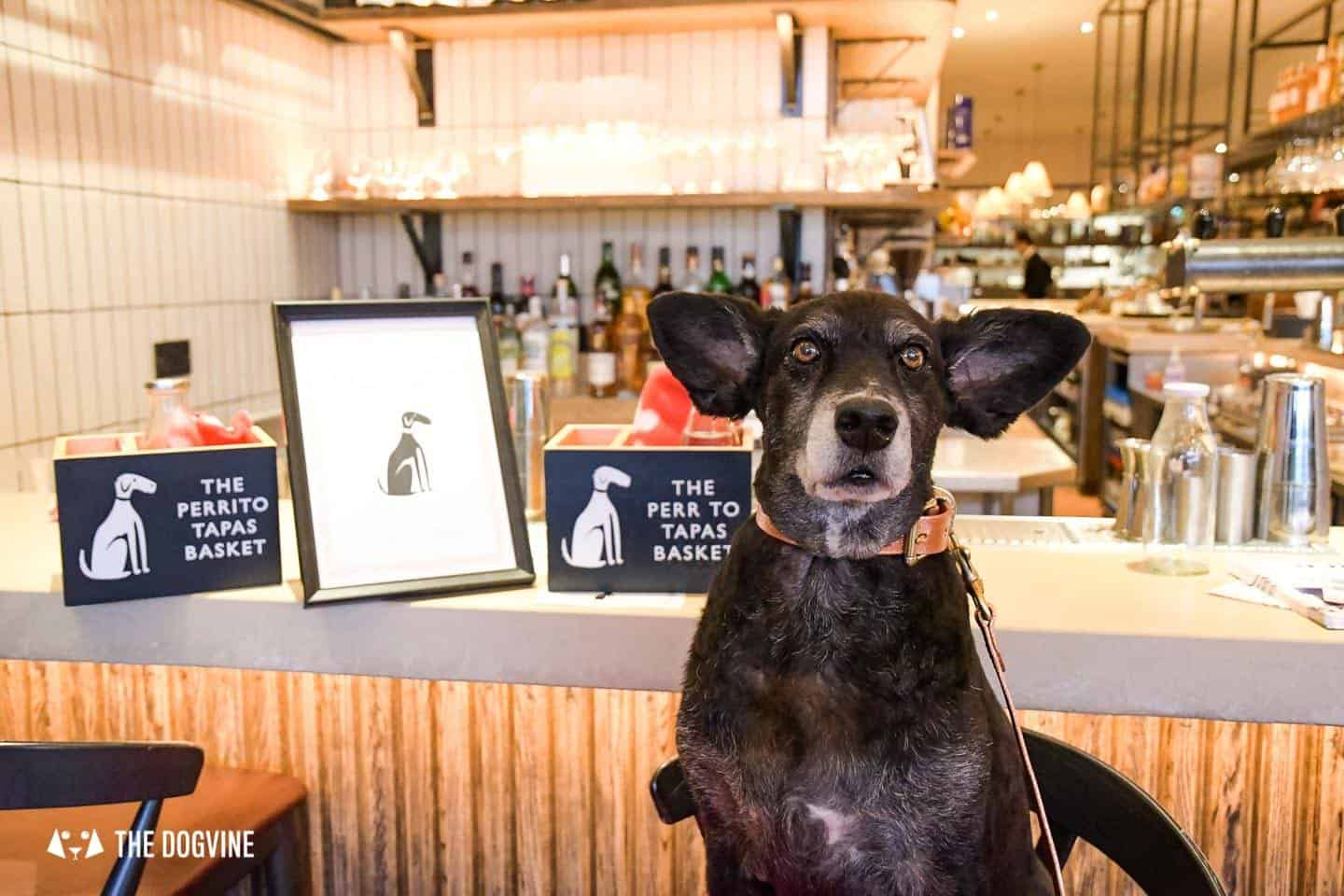 Dog-friendly London | The Best Dog-friendly Things To Do in London - Dog Tapas at Brindisa Battersea