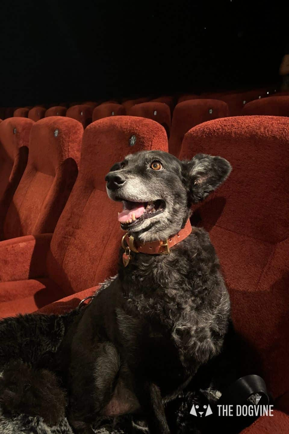 Dog-friendly London | The Best Dog-friendly Things To Do in London - Dog-friendly Cinema