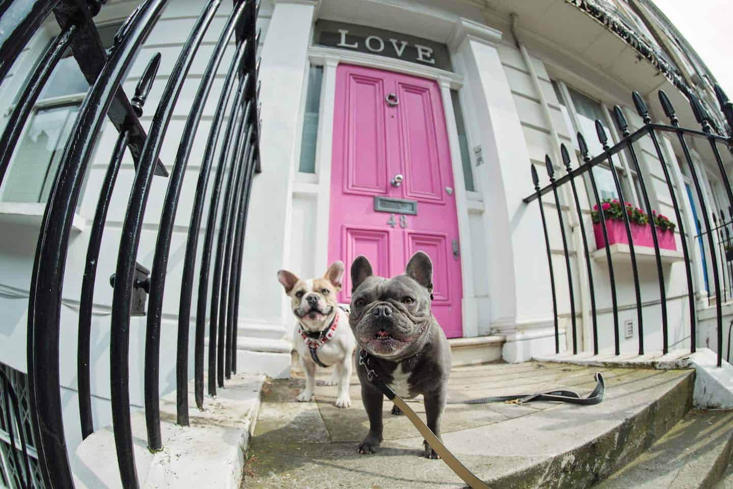 Dog-friendly London | The Best Dog-friendly Things To Do in London - Herbie and Dave
