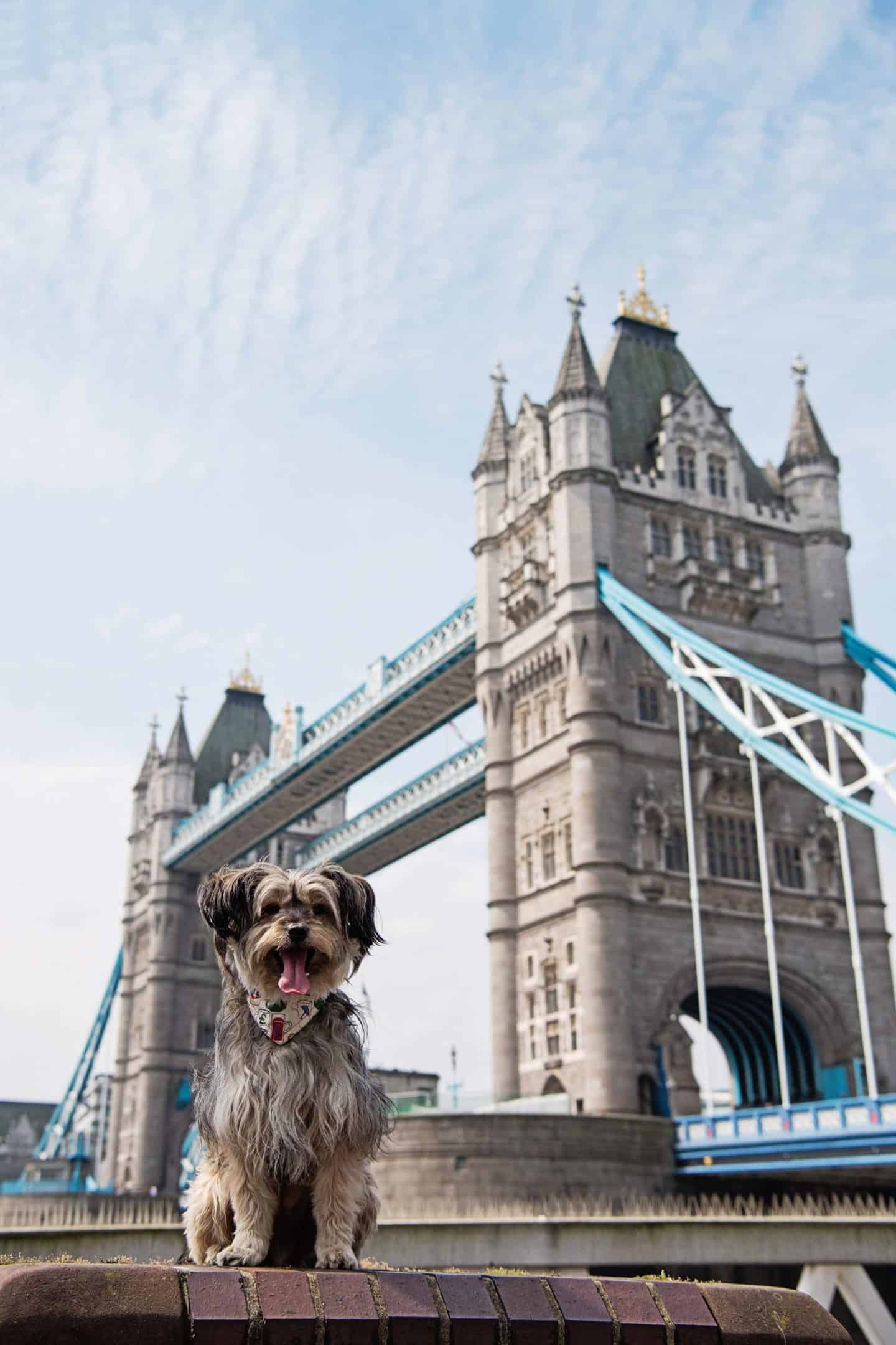 Dog-friendly London | The Best Dog-friendly Things To Do in London - Tower Bridge