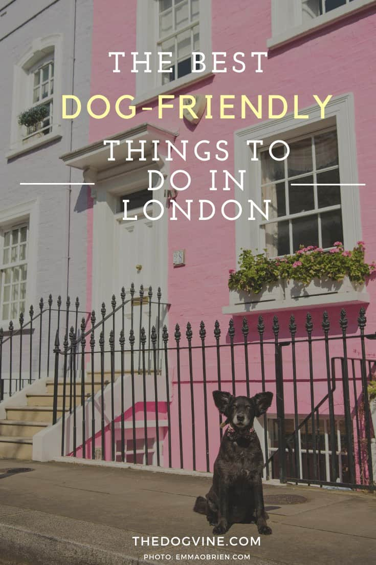 THE BEST DOG-FRIENDLY THINGS TO DO IN LONDON - DOG-FRIENDLY LONDON