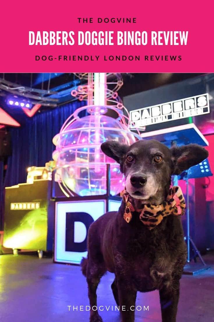 Dabbers Doggie Bingo Review - The Dogvine
