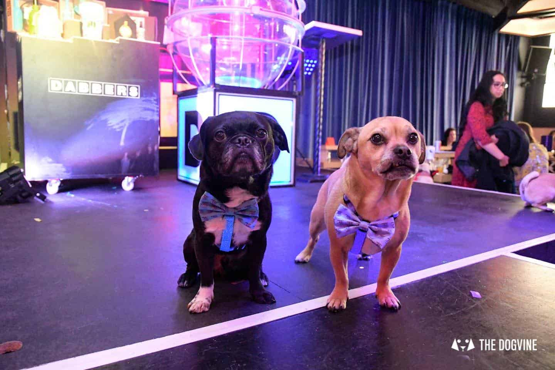 Dabbers Doggie Bingo - The Dogvine Review 15
