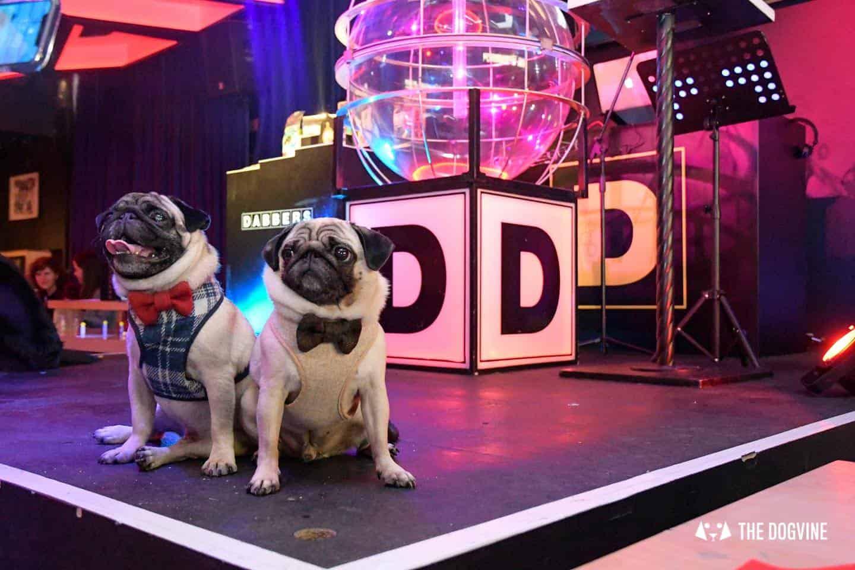 Dabbers Doggie Bingo - The Dogvine Review 18