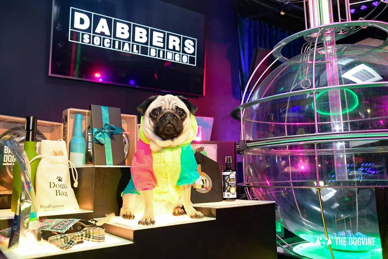 Dabbers Doggie Bingo - The Dogvine Review 21