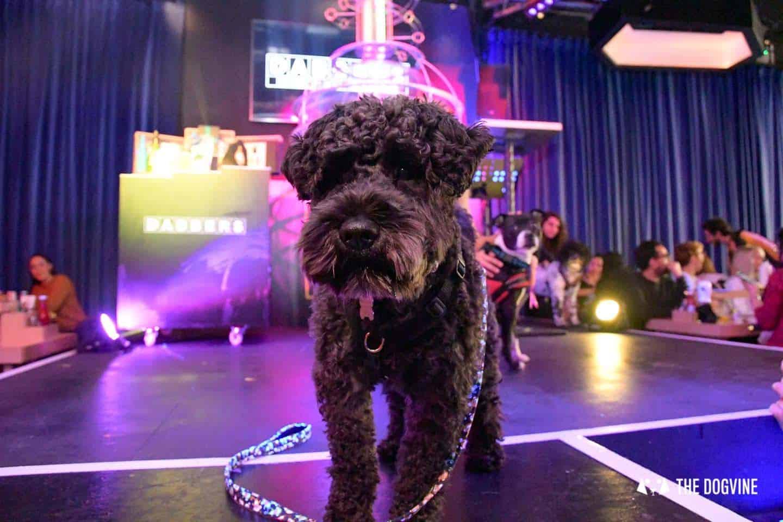 Dabbers Doggie Bingo - The Dogvine Review 22