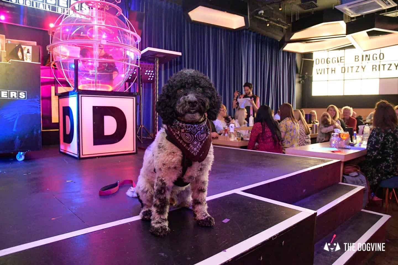 Dabbers Doggie Bingo - The Dogvine Review 23
