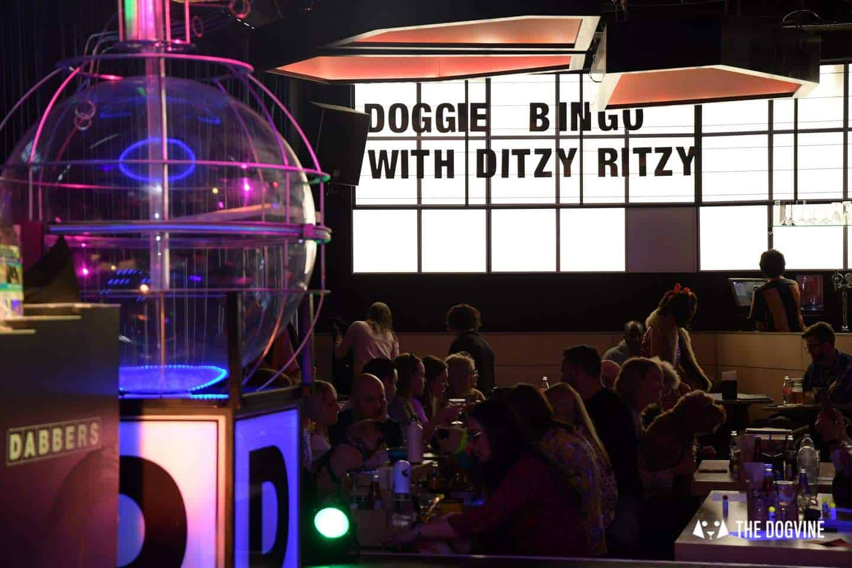 Dabbers Doggie Bingo - The Dogvine Review 24