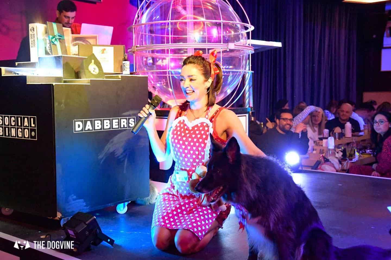 Dabbers Doggie Bingo - The Dogvine Review 29
