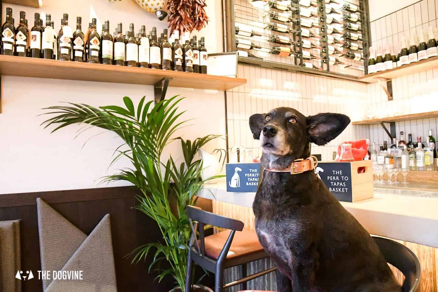 Delicious Doggy Tapas at Dog-friendly Brindisa Battersea