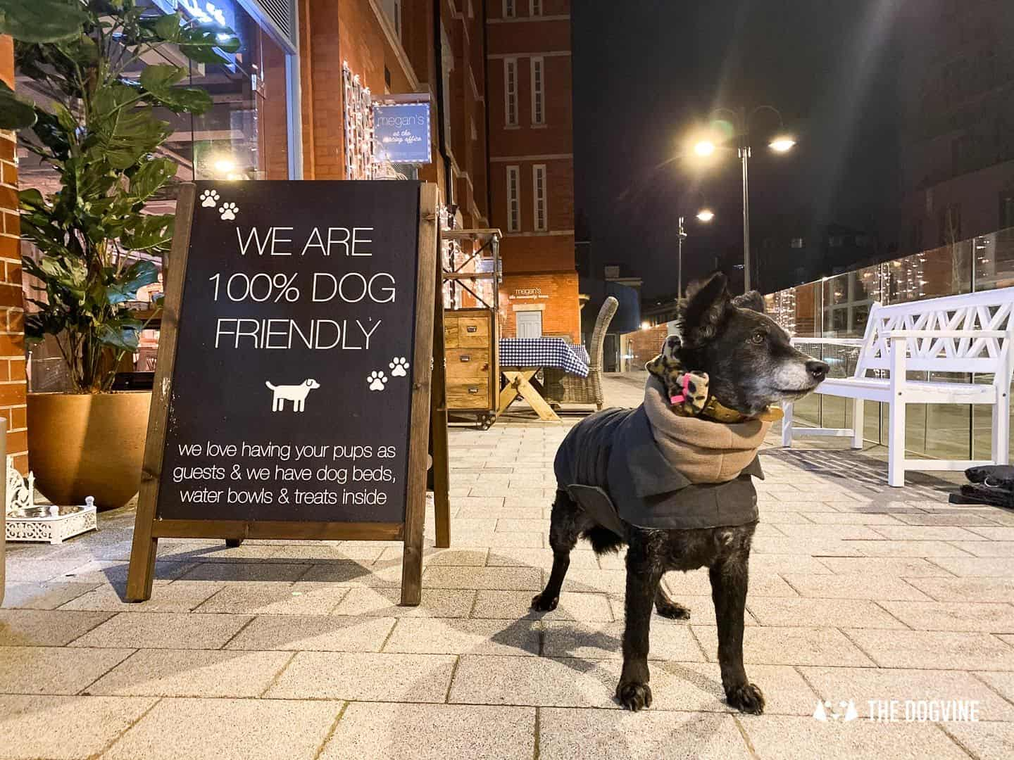 Dog-friendly Megan's Islington 19