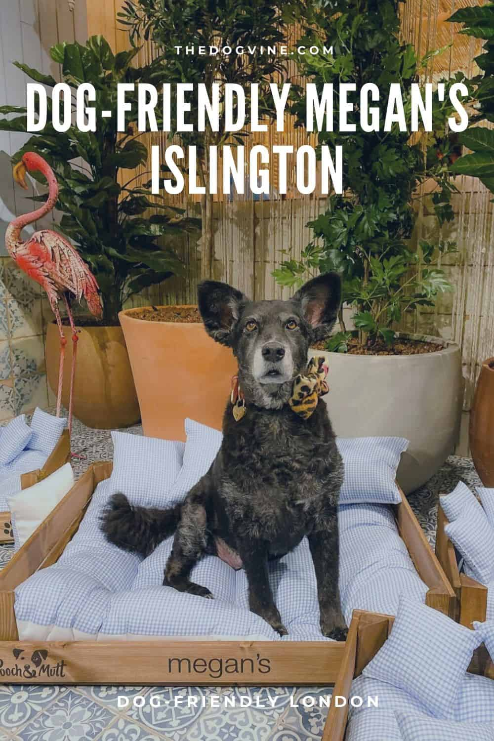 Dog-friendly Megan's Islington - Dog-friendly London 2