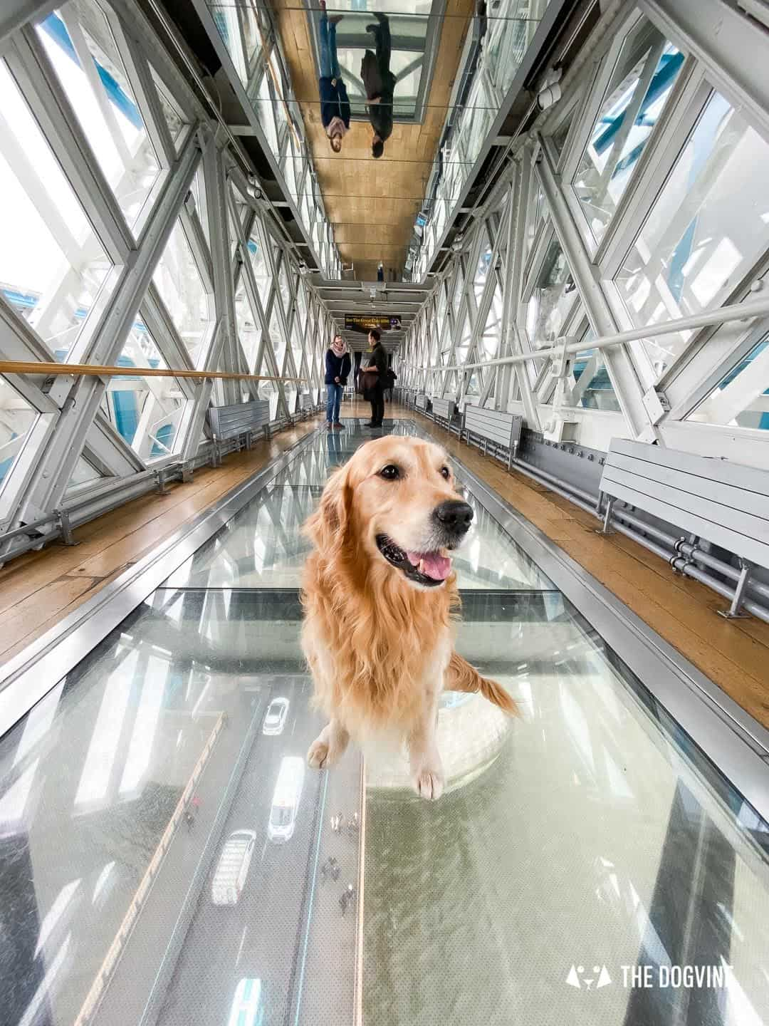 Dog-friendly Tower Bridge London 18