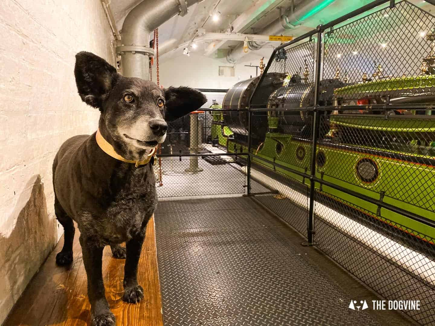 Dog-friendly Tower Bridge London 22