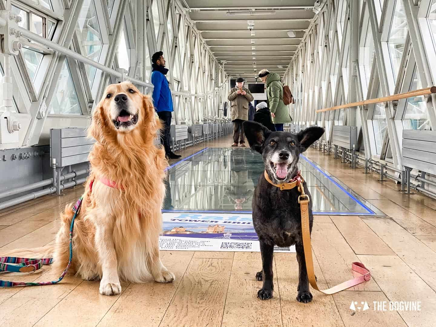 Dog-friendly Tower Bridge London 3