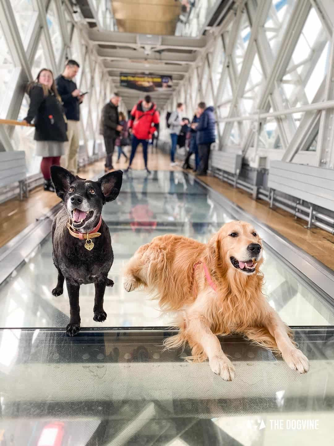 Dog-friendly Tower Bridge London 40