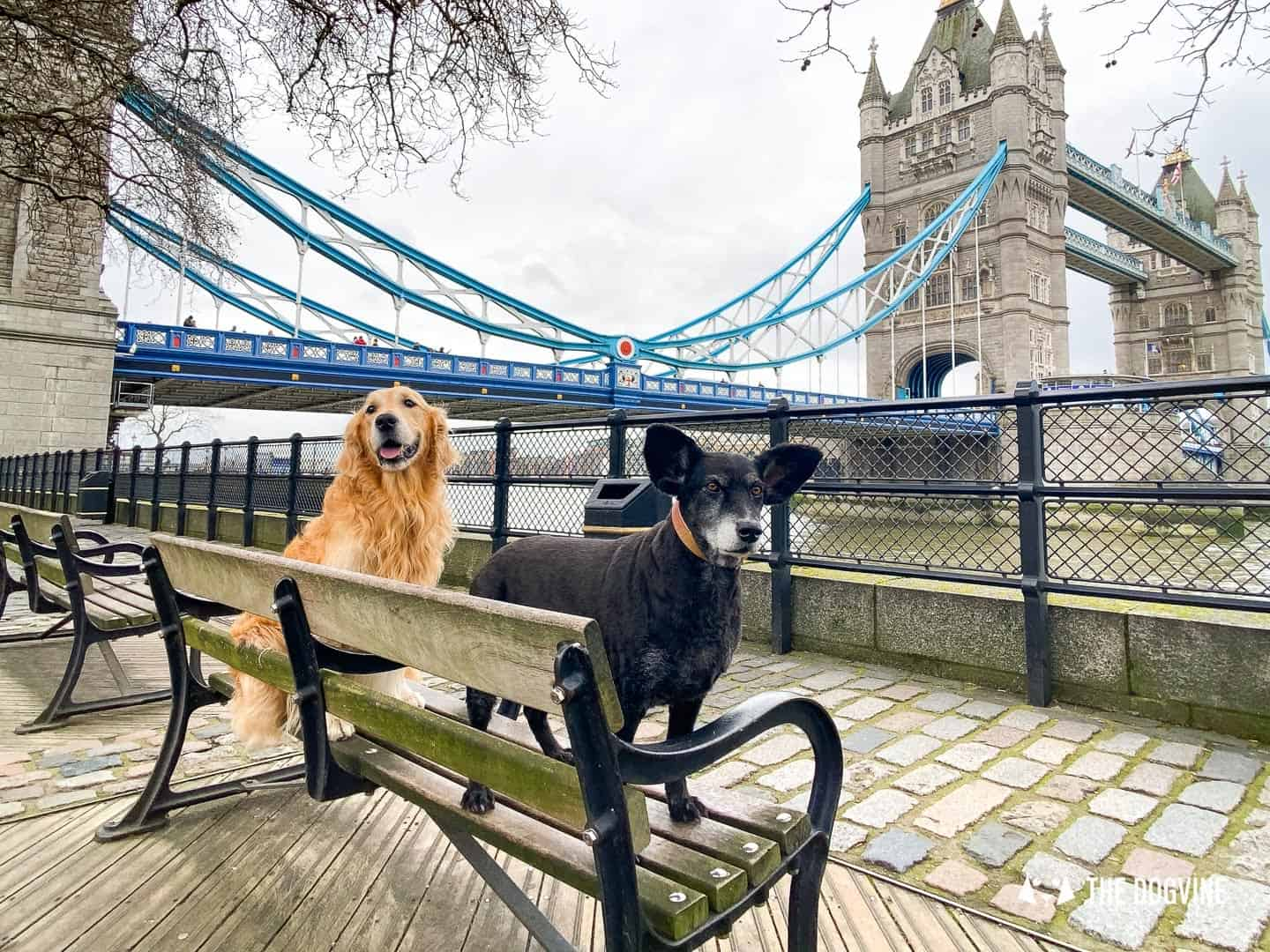 Dog-friendly Tower Bridge London 42