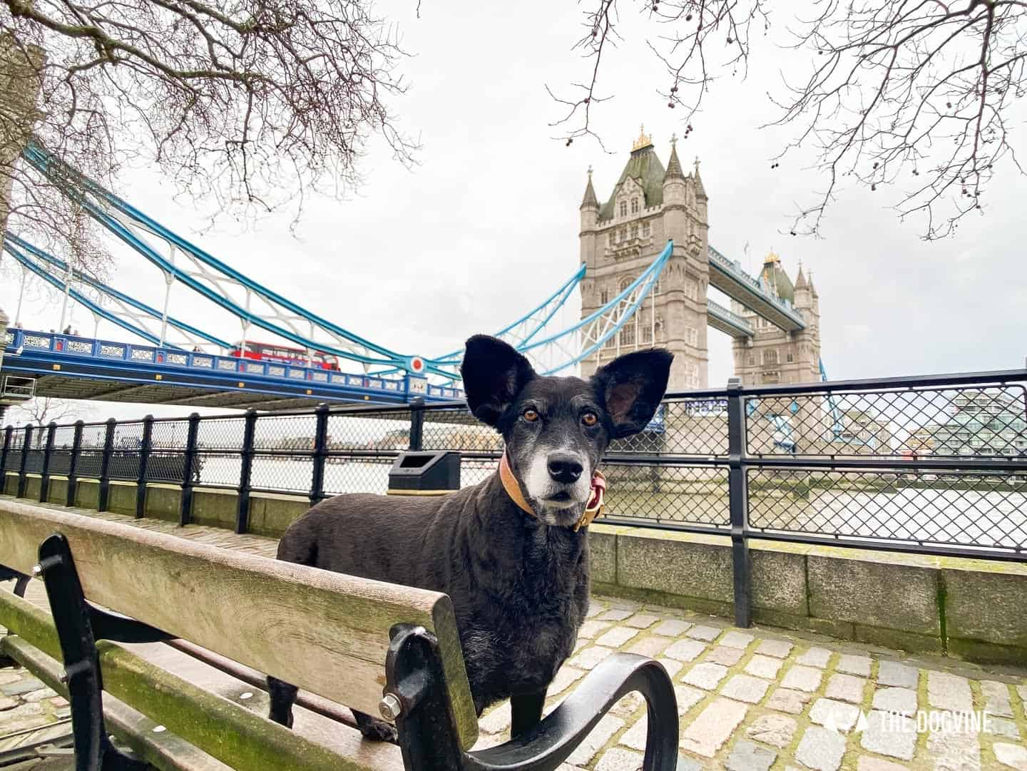 Dog-friendly Tower Bridge London 46