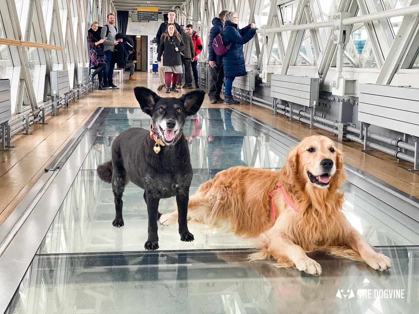Dog-friendly Tower Bridge London 6