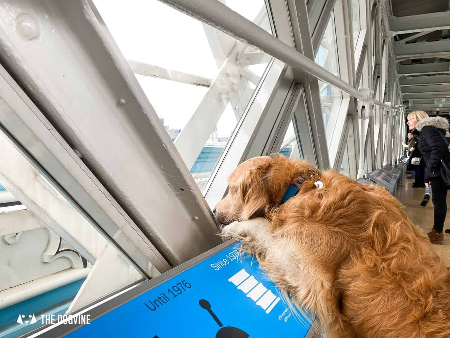 Dog-friendly Tower Bridge London 7