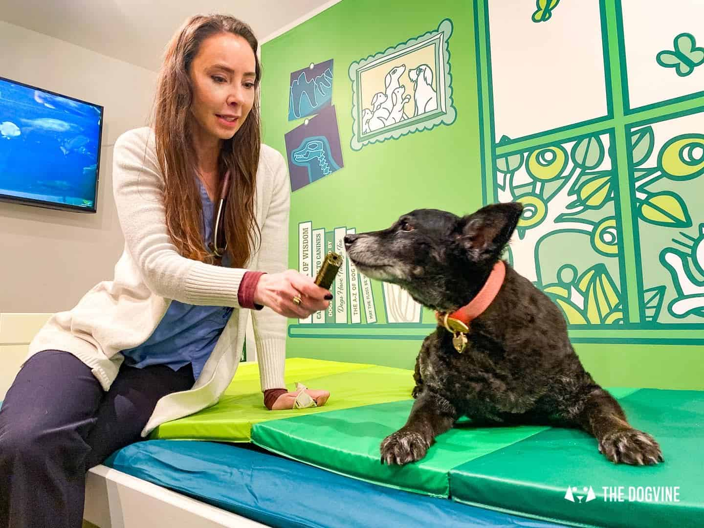 Lily's Kitchen Doggy Dentist Hollywoof Smile 19