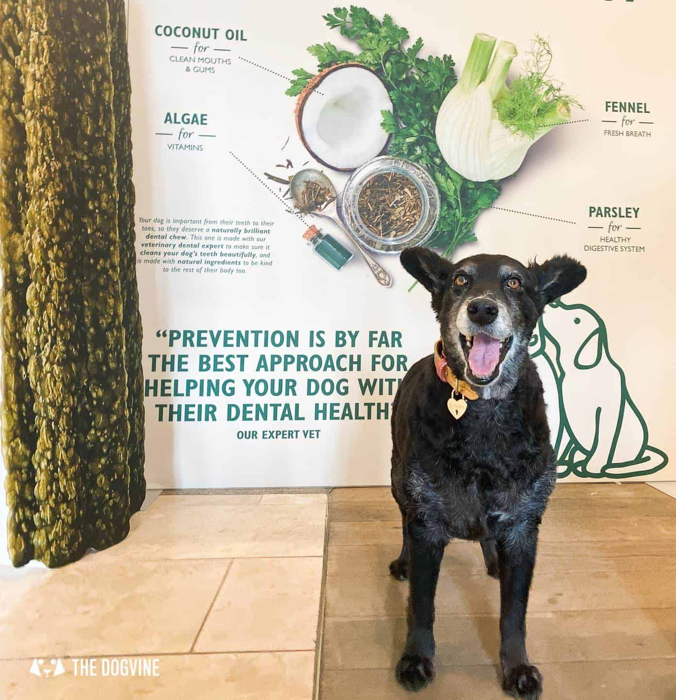 Lily's Kitchen Doggy Dentist Hollywoof Smile 28