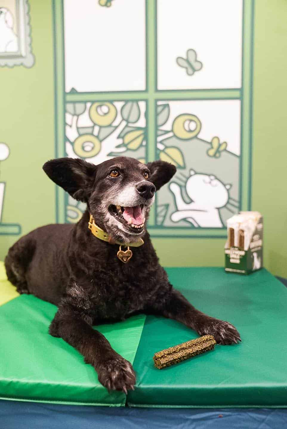 Lily's Kitchen Doggy Dentist Hollywoof Smile 6