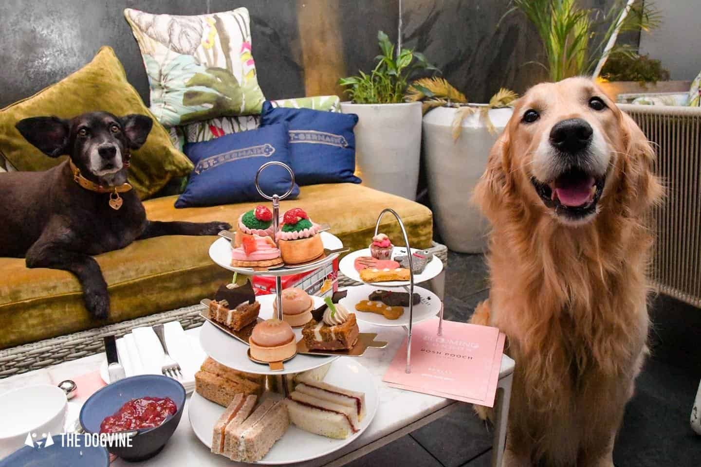 Radley Dog Afternoon Tea South Place Hotel 29