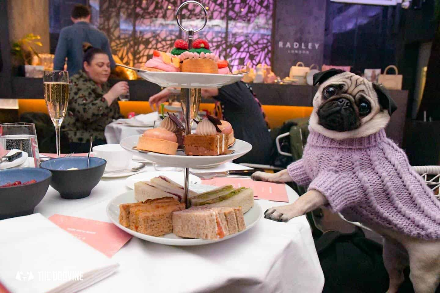 Radley Dog Afternoon Tea | 8 Reasons Why This Is The Pawfect Treat