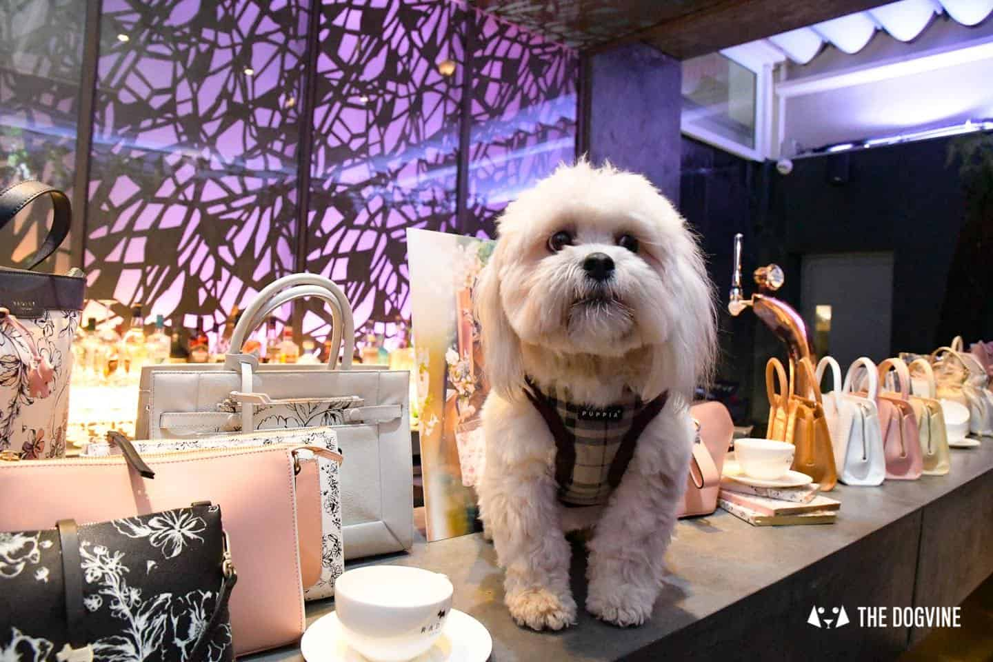 Radley Dog Afternoon Tea South Place Hotel 52