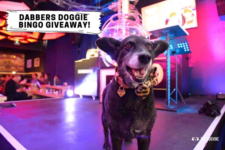 The Dogvine x Dabbers Doggie Bingo Giveaway