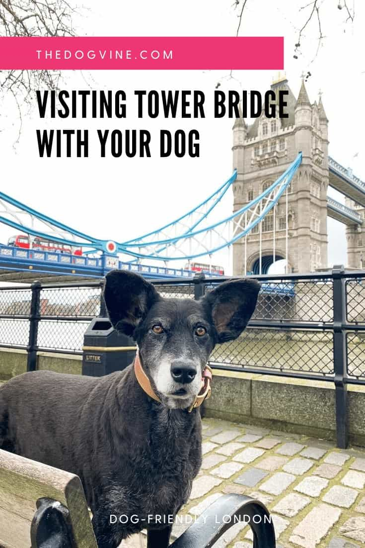 Visiting Tower Bridge With Your Dog - The Dogvine