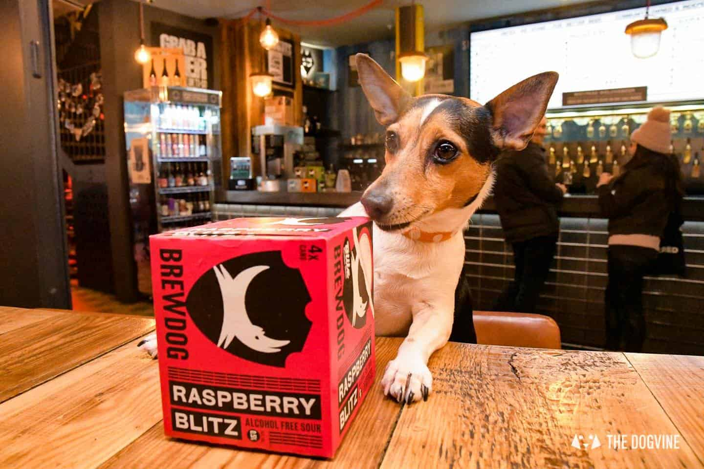 Dog-friendly Canary Wharf and Limehouse - Brewdog 4