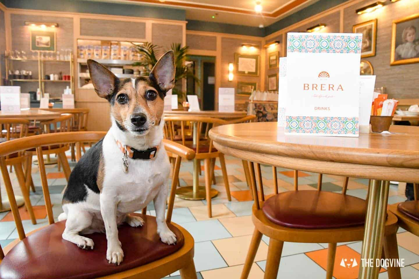 Dog-friendly Canary Wharf and Limehouse - Cafe Brera Riverside 1